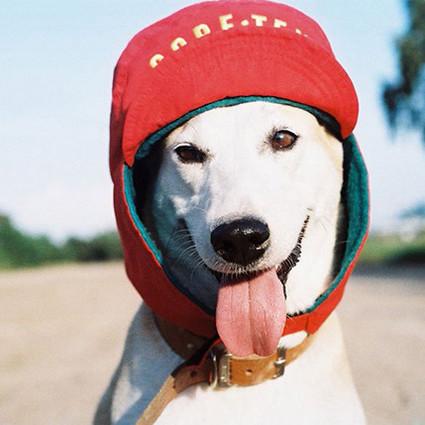 她可能是全世界最快乐的流浪犬