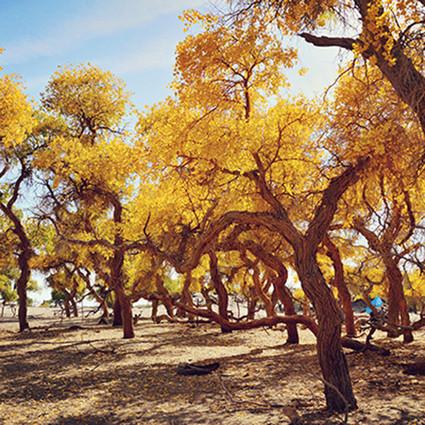 十一小长假出什么国,这7个人间仙境般的秋景都在国内!