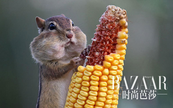 #5 Just Chillin, Eating Some Corn