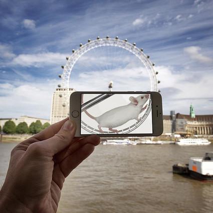 iPhone的乱入艺术,小白鼠也能登上伦敦眼