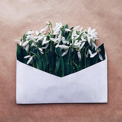 寄往春天的鲜花之信