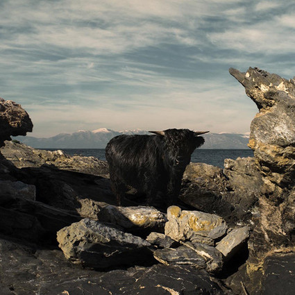 动物和风景拼凑的概念风光,好像只有梦里才得见