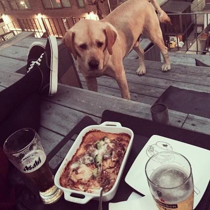 一家可以带着宠物享受悠闲时光的主题餐厅