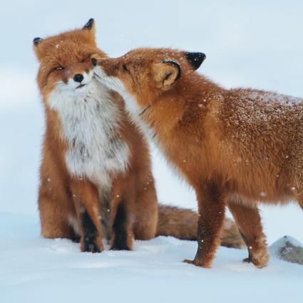 接吻才不是人类专属,14张萌萌的动物kiss照让你心都融化