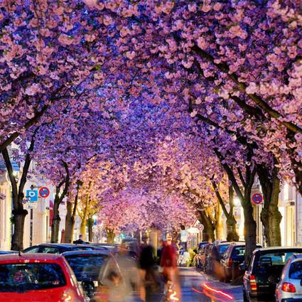 再不赏樱花就要等明年啦!这些樱花圣地你绝对不能错过~