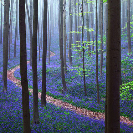 比利时的紫色仙境,每到春天就美得像天堂一样!