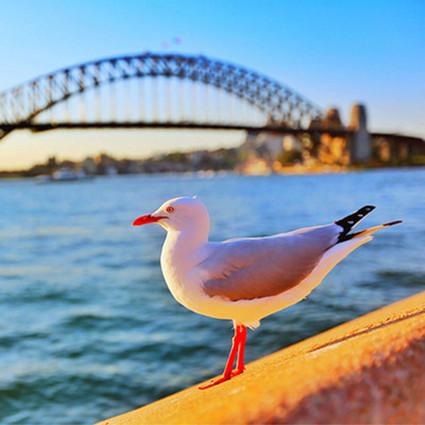 达人专栏 | 澳大利亚悉尼的美景美味美时光
