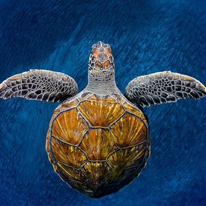 全球水下摄影大赛,我们水下的世界真是美得震撼