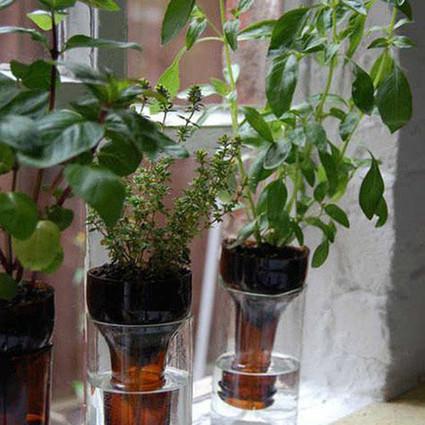 酒瓶变花瓶:DIY实用个性的艺术花器