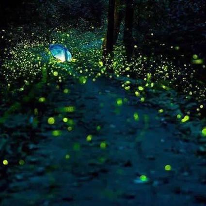 别让霓虹取代荧光,每一只萤火虫都在用短暂的一生,默默发光