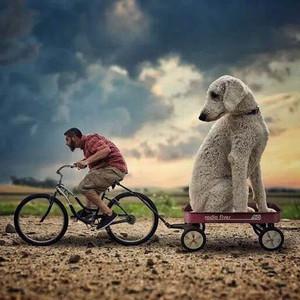 这是一只网红狗和它主人的故事~
