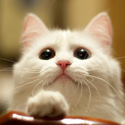 道理我都懂,但要猫咪来说!