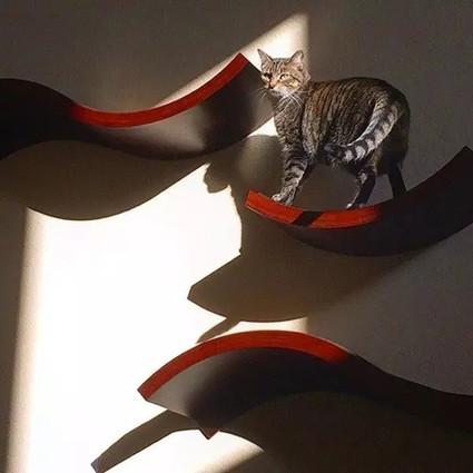 猫奴看过来了!这些设计让你和主子和谐共生!