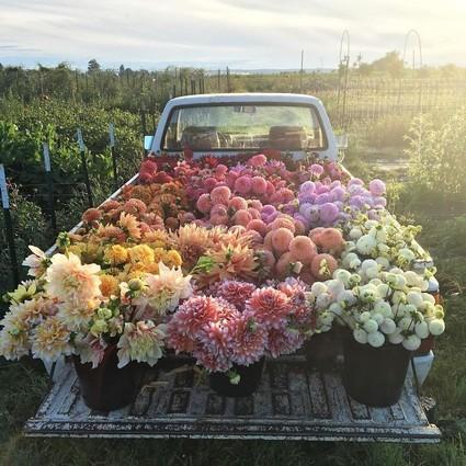 看过她的照片,你会觉得花艺师是世界上最好的工作