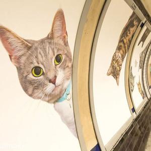 喵星人福利日,伦敦的地铁站都被猫咪占领了!