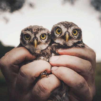 带你最近距离接触野生动物,就像触摸森林的灵魂
