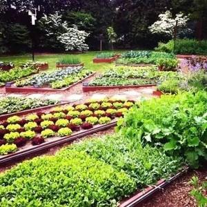 白宫易主,总统夫人最牵挂的却是菜园子