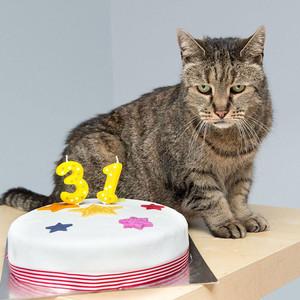 世界上最老的喵星人31岁了!