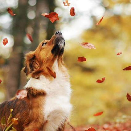 你见过这么享受秋天的汪星人吗?