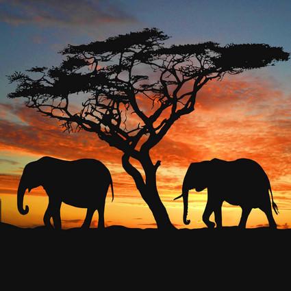 沒有人能抗拒來自非洲的野性魅力,去看一次動物大遷徙吧,現在買機票比旺季便宜兩三千!