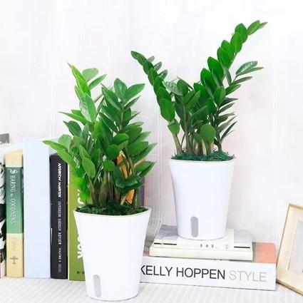 养这8种植物在办公室,助你鸡年财旺运好工作顺心