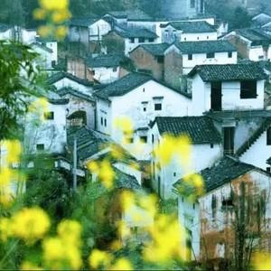 杭州私藏了最后一条跨省水路,坐船便能到达开满油菜花的徽派古城,美爆!