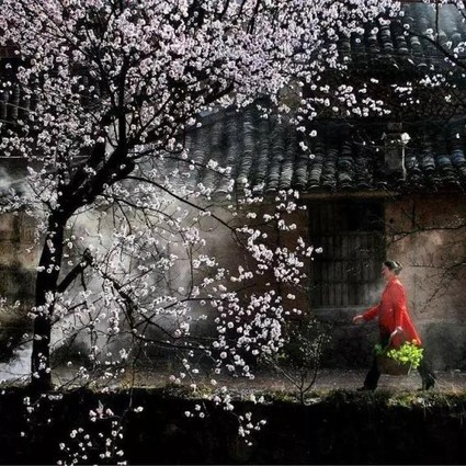 旅游月历-3月篇丨春风十里,最适合就是去赴一场花宴~