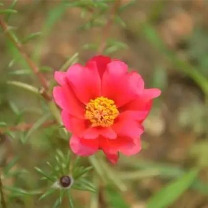春天适合赏花,还适合在家里种下这些花