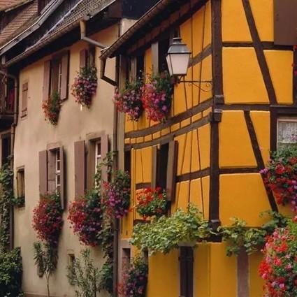 你家窗台还没变花园 ?只因缺了这6种花