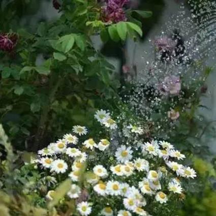 春节外出前,你的花草安顿好了吗?