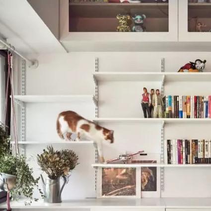 一只'单身狗'和'两只猫'的家