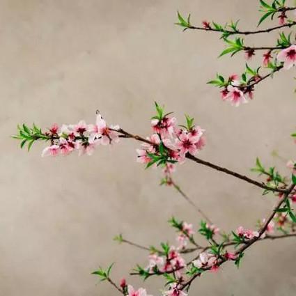烟花三月,和煦的风一吹,把关于春天的千言万语浓缩成了两个字——扬州。