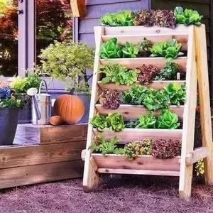 1平米都不用,照样种菜养花美了整个家