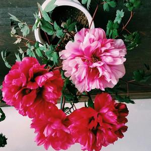 三四月樱花烂漫,不止一处可赏花。