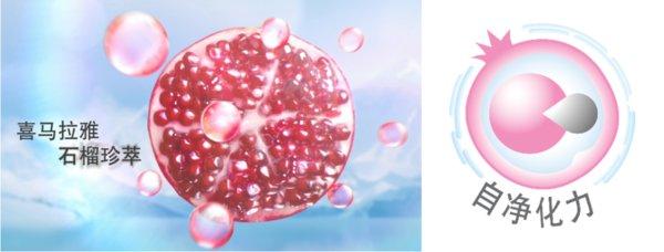 增强细胞自净化机能