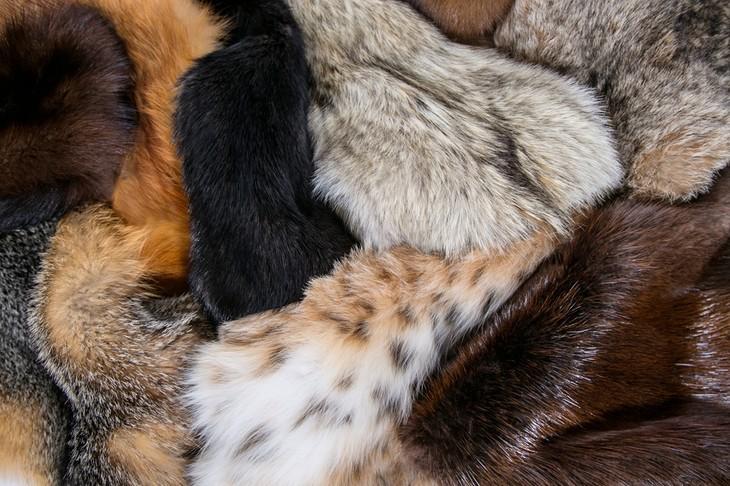Wild-Fur-1
