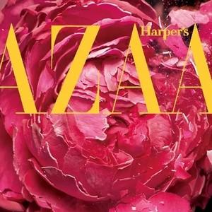 消逝的玫瑰浓缩的灵魂,化做精油守护你!