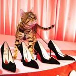 這世上還有既美又不累的高跟鞋嗎?