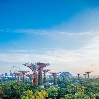 """春暖花开的日子里, 跟着新加坡滨海湾花园一起 """"云春游"""""""