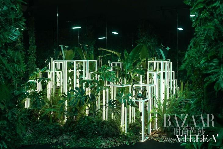 04 迷雾森林中布满了触手可及的绿色植物